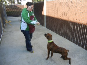 President Crystal at the Humane Society. There are many ways to volunteer.