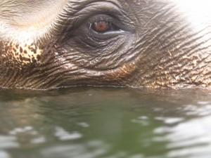 The eye of Moey at Elephant World