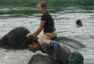 Bathing the elephants at Elephants World on a Thailand community service trip.
